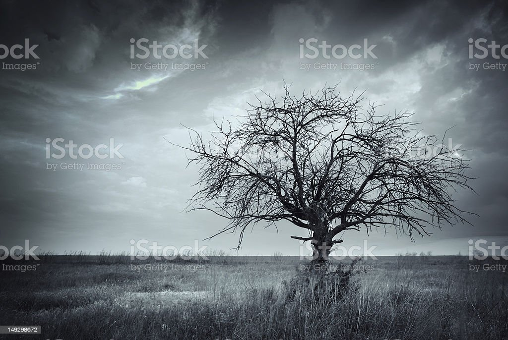 Lonely dead tree. stock photo