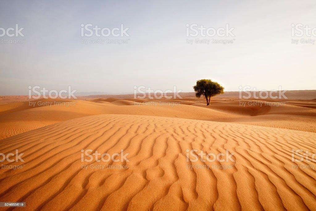 lonely desert tree stock photo