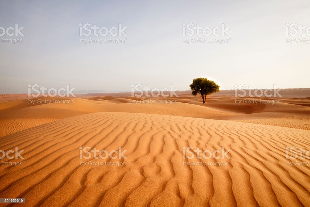 lonely desert tree stock photo