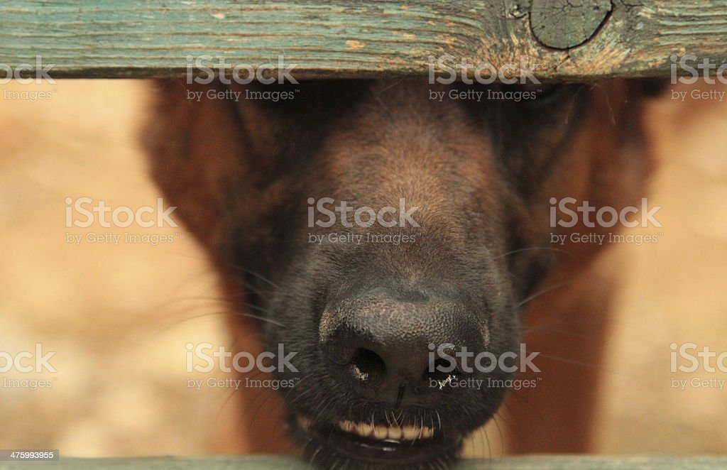 Lonely dog behind a fence royalty-free stock photo
