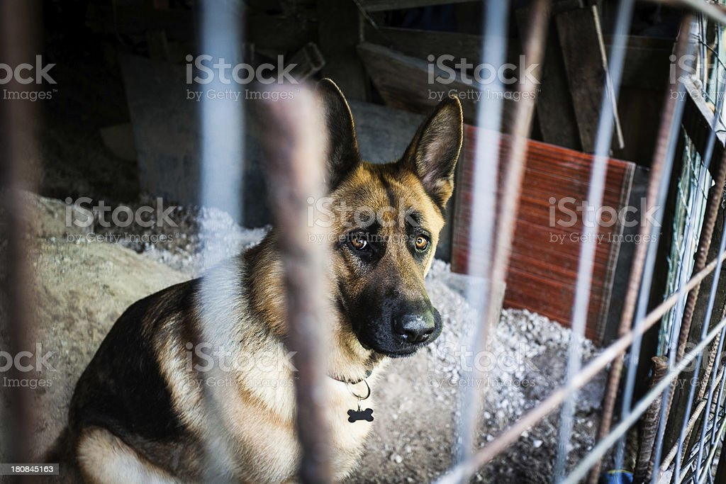Lonely Dog Behind the Bars of a Cage royalty-free stock photo
