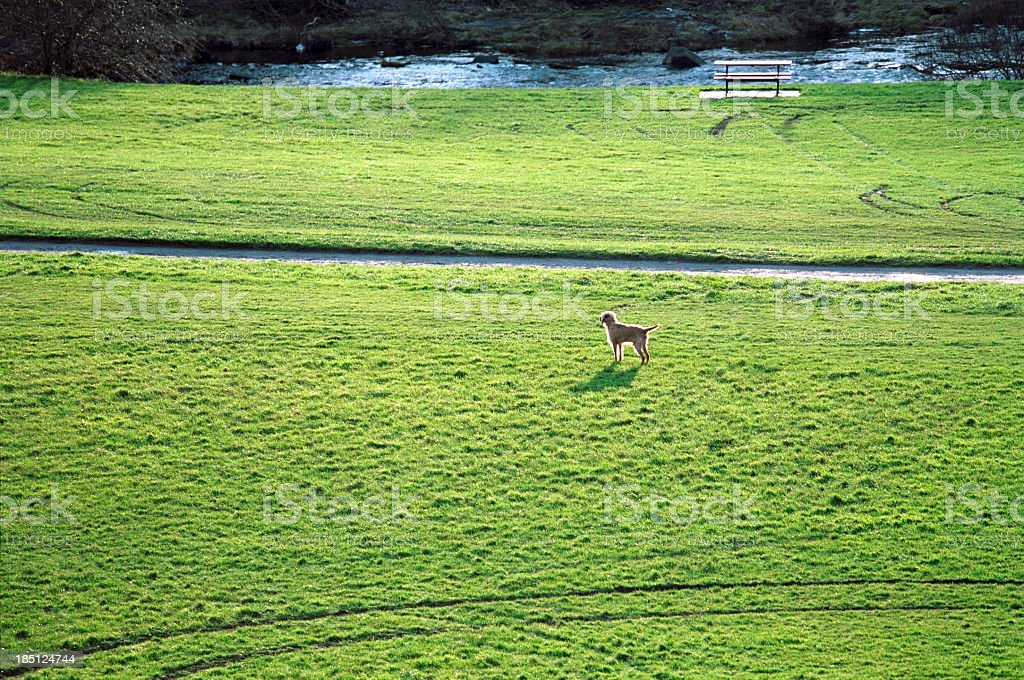 Lonely dog in the nature stock photo