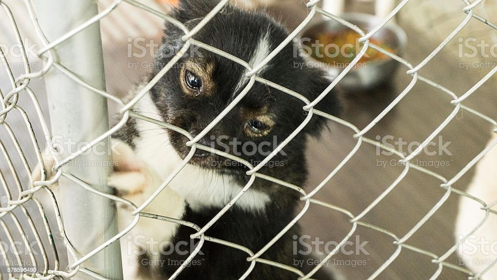 Lonely dog locked in iron cage stock photo