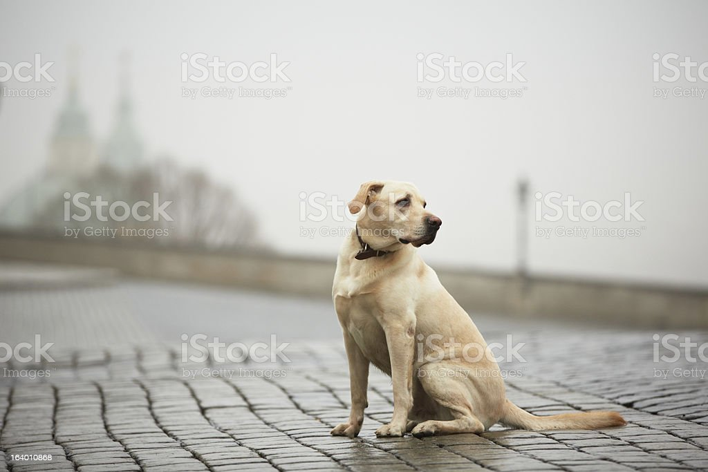Lonely dog stock photo