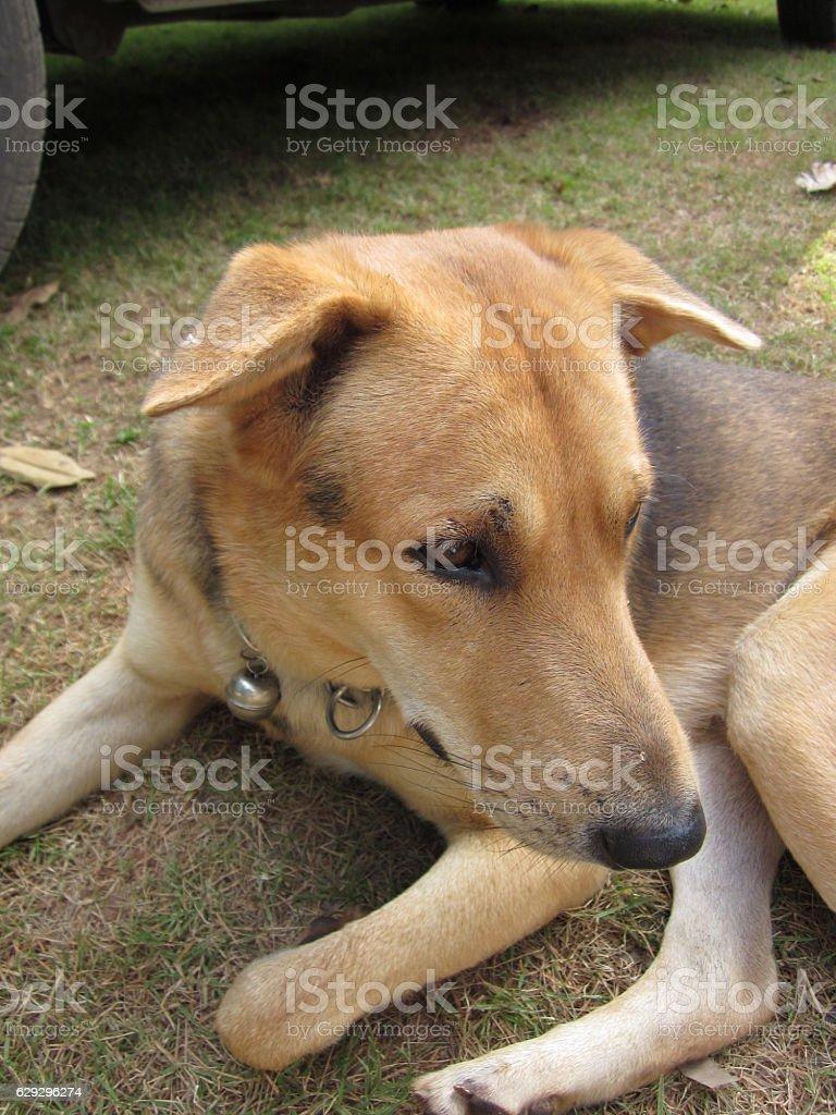 Lonely dog. stock photo