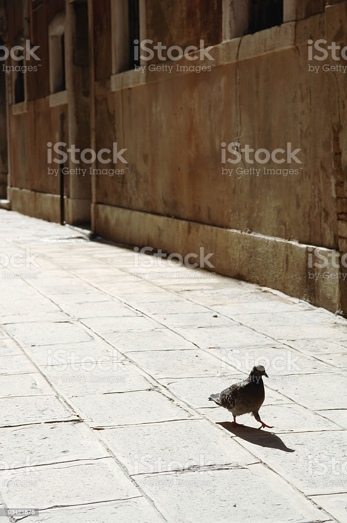 Lonely Dove royalty-free stock photo