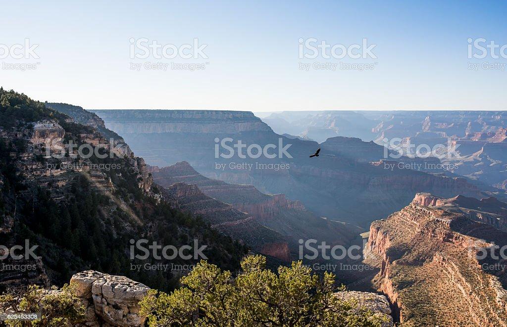 Lonely eagle flying over Grand Canyon, Arizona, USA. stock photo