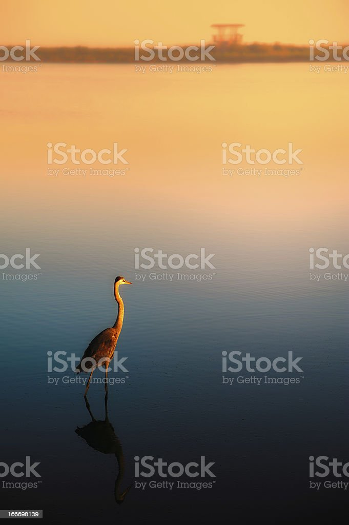 Lonely egret at sunset royalty-free stock photo