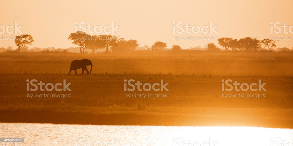 Lonely Elephant Bull Crossing Zambezi Plains stock photo
