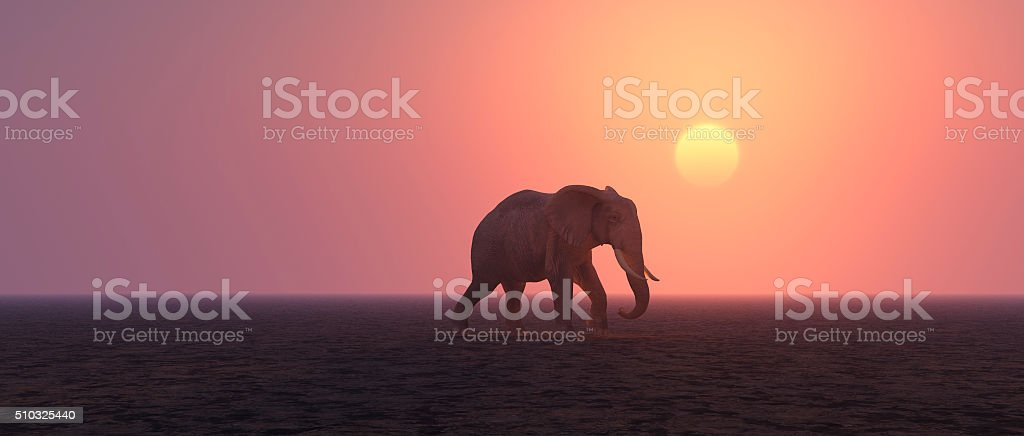 Lonely elephant walking in barren landscape stock photo