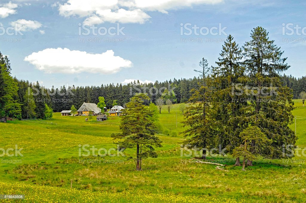 lonely farm in the green Black Forest stock photo