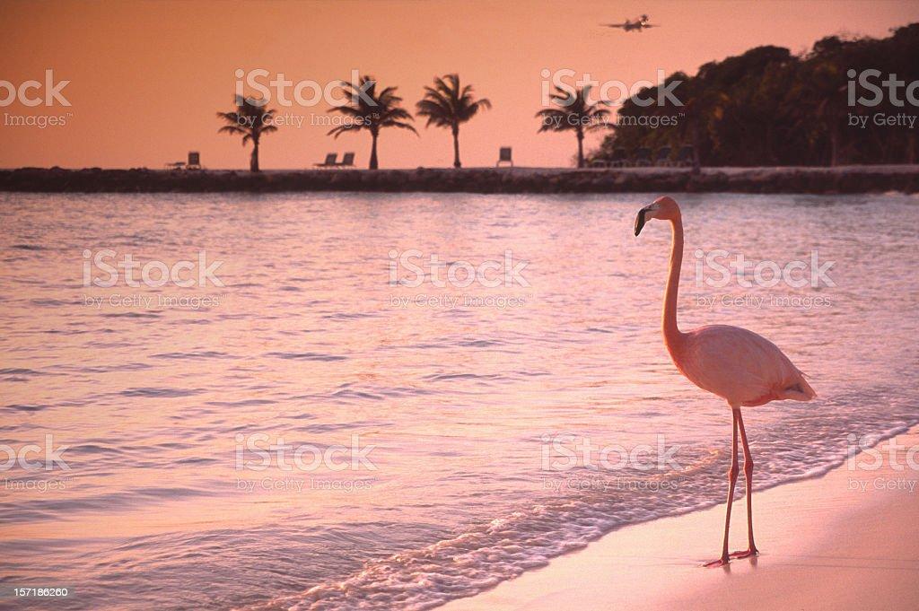 Lonely Flamingo stock photo