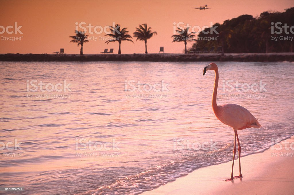 Lonely Flamingo stock photo