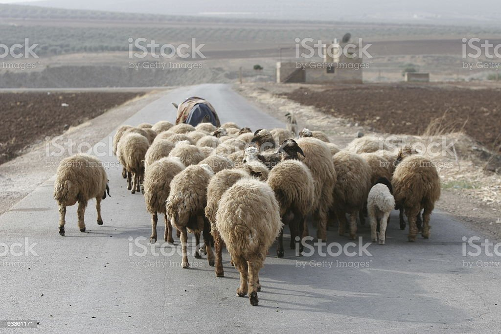 Lonely Flock royalty-free stock photo