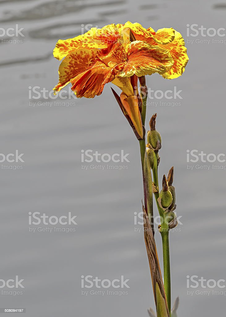 Lonely Flower stock photo