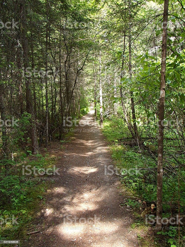 Lonely Forest Path stock photo