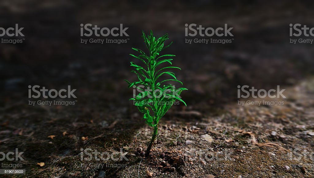 lonely green plant royalty-free stock photo