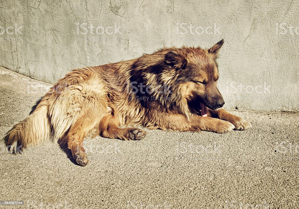 Lonely homeless dog outdoors stock photo