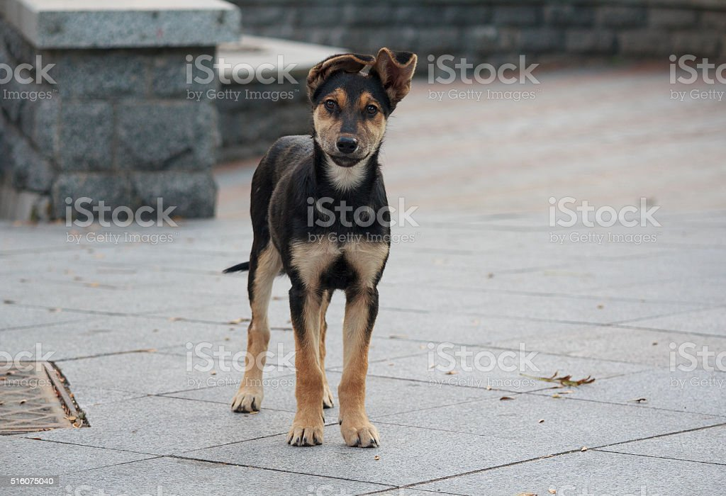 Lonely homeless puppy looking with hope. Animals stock photo