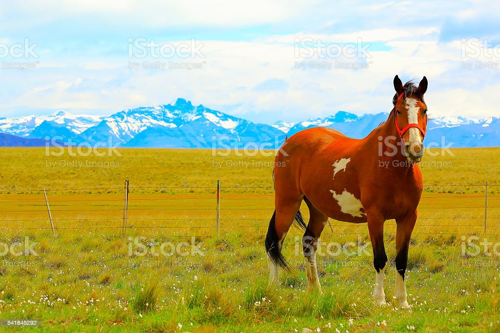 lonely horse, Estancia in pampa meadows, patagonia andes, Argentina stock photo