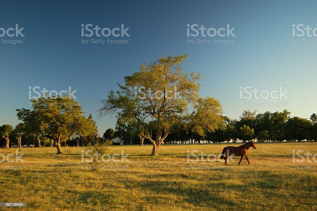 Lonely horse in a treed pasture stock photo
