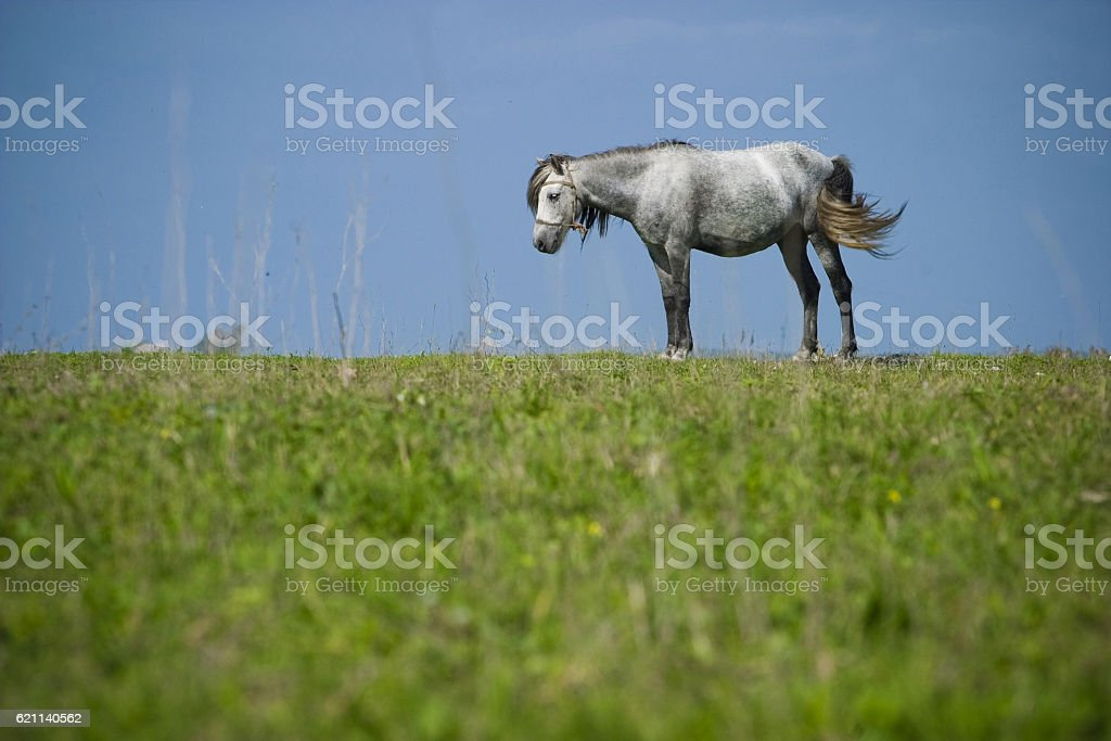 Lonely horse on meadow stock photo