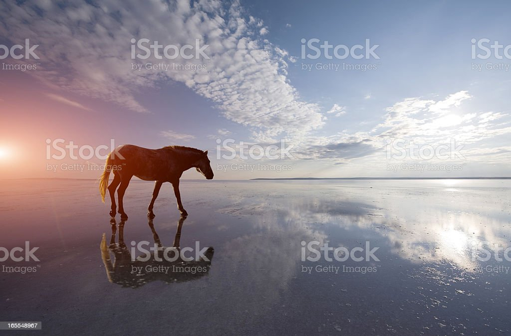 lonely horse royalty-free stock photo