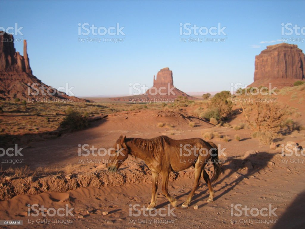 Lonely horse walks through monument valley stock photo