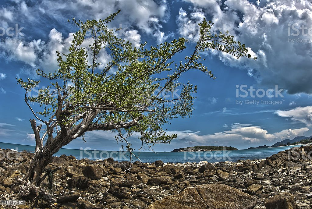 Lonely in paradise royalty-free stock photo
