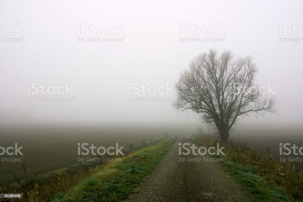 Lonely in the fog royalty-free stock photo
