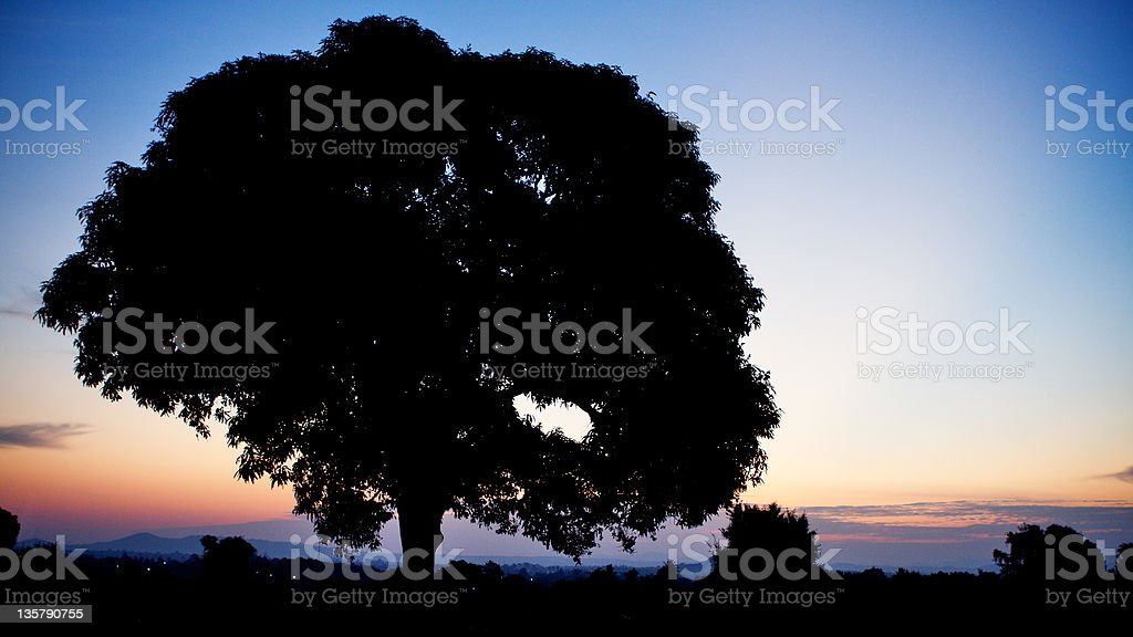 Lonely large tree royalty-free stock photo