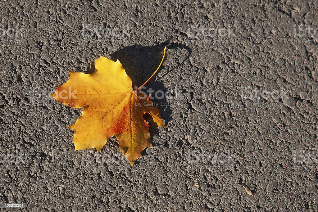 lonely leaf royalty-free stock photo