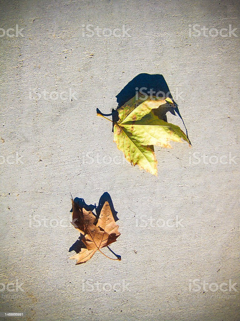 Lonely Leaves royalty-free stock photo