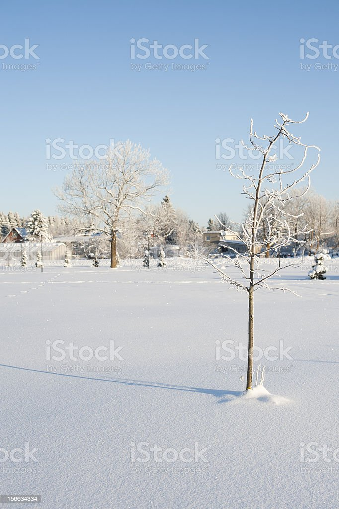 Lonely Little Snowy Tree royalty-free stock photo