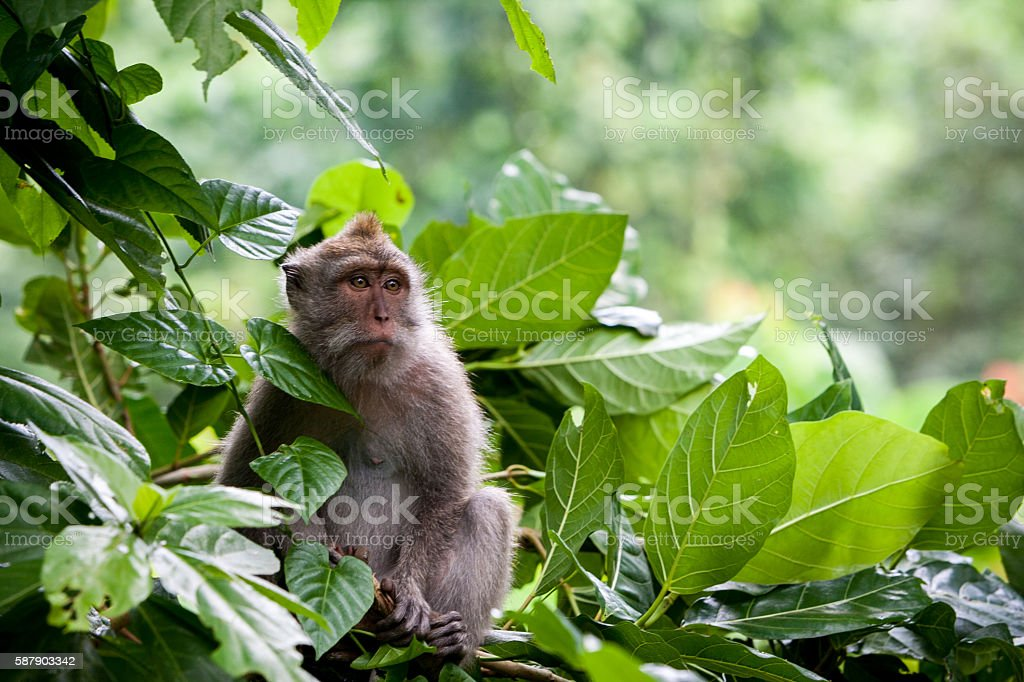 lonely monkey stock photo