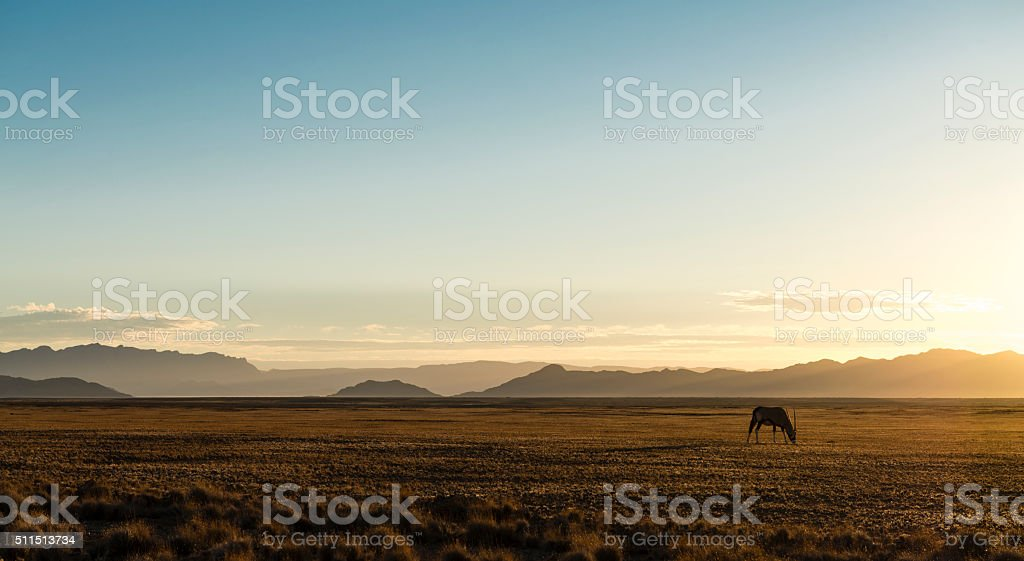 Lonely Oryx in the Desert (Namibia) stock photo