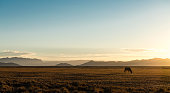 Lonely Oryx in the Desert (Namibia)