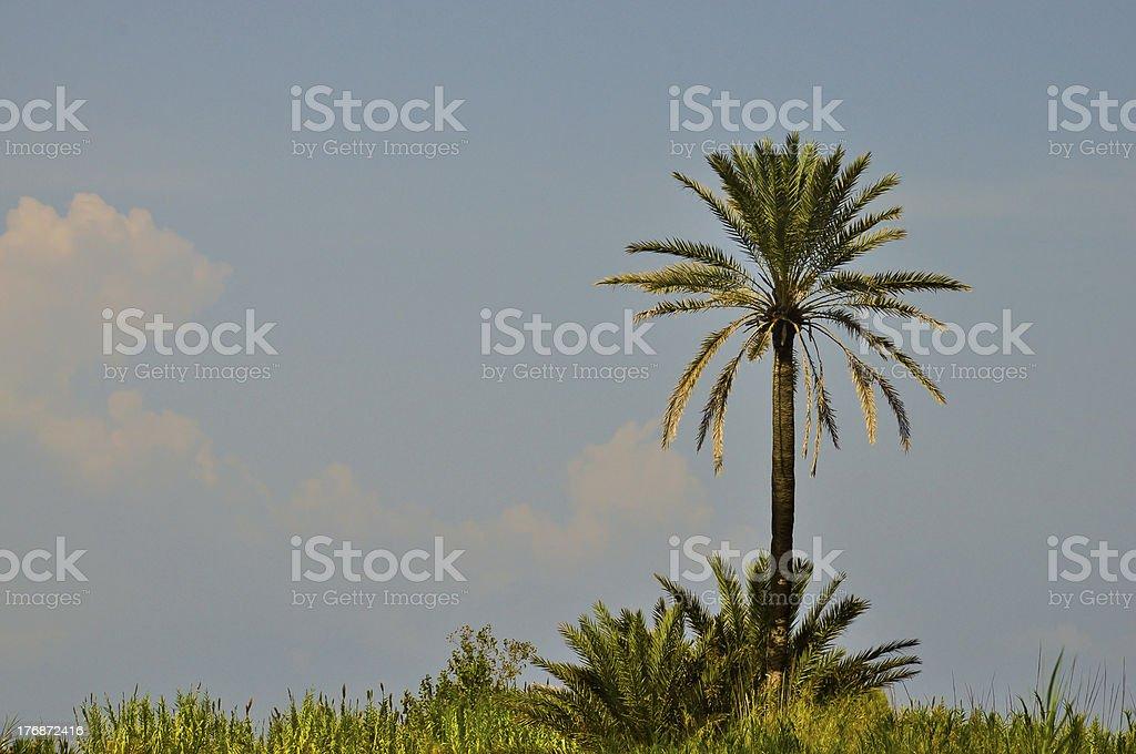 Einsamen Palme in der savannah Landschaft Lizenzfreies stock-foto
