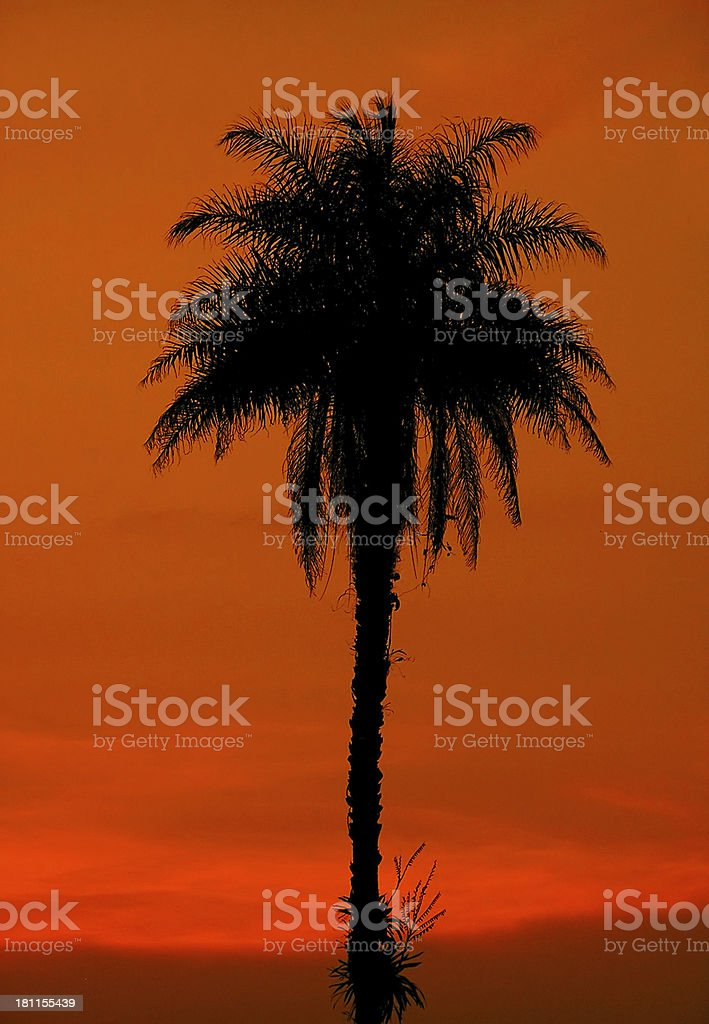 Lonely Palm Tree royalty-free stock photo