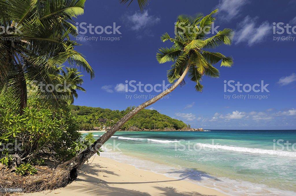 Lonely palmtree at the takamaka beach royalty-free stock photo