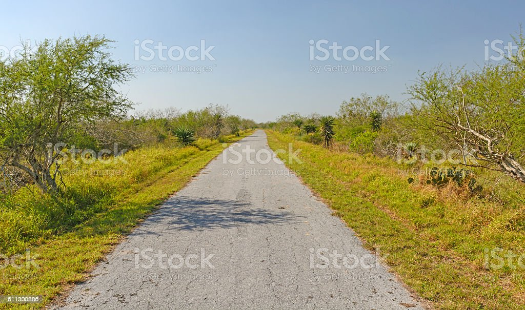 Lonely Path on a Barrier Island stock photo