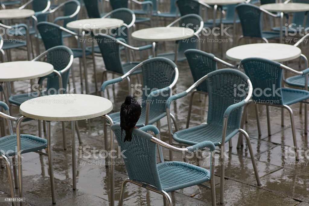 Lonely pigeon on a chair stock photo