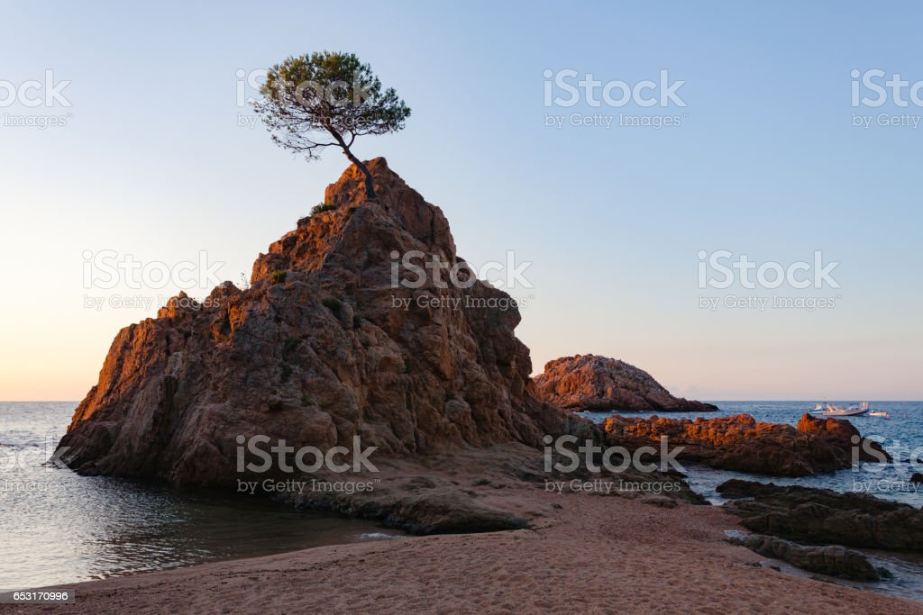 Lonely pine on a rock at dawn in Tossa del mar stock photo