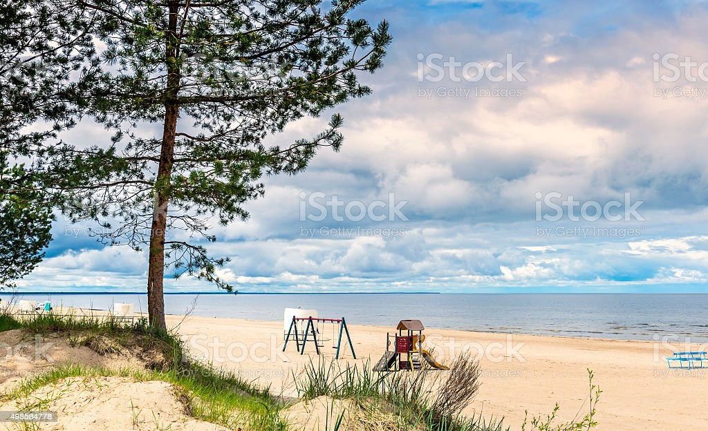 Lonely pine tree at  beach of the Baltic Sea stock photo