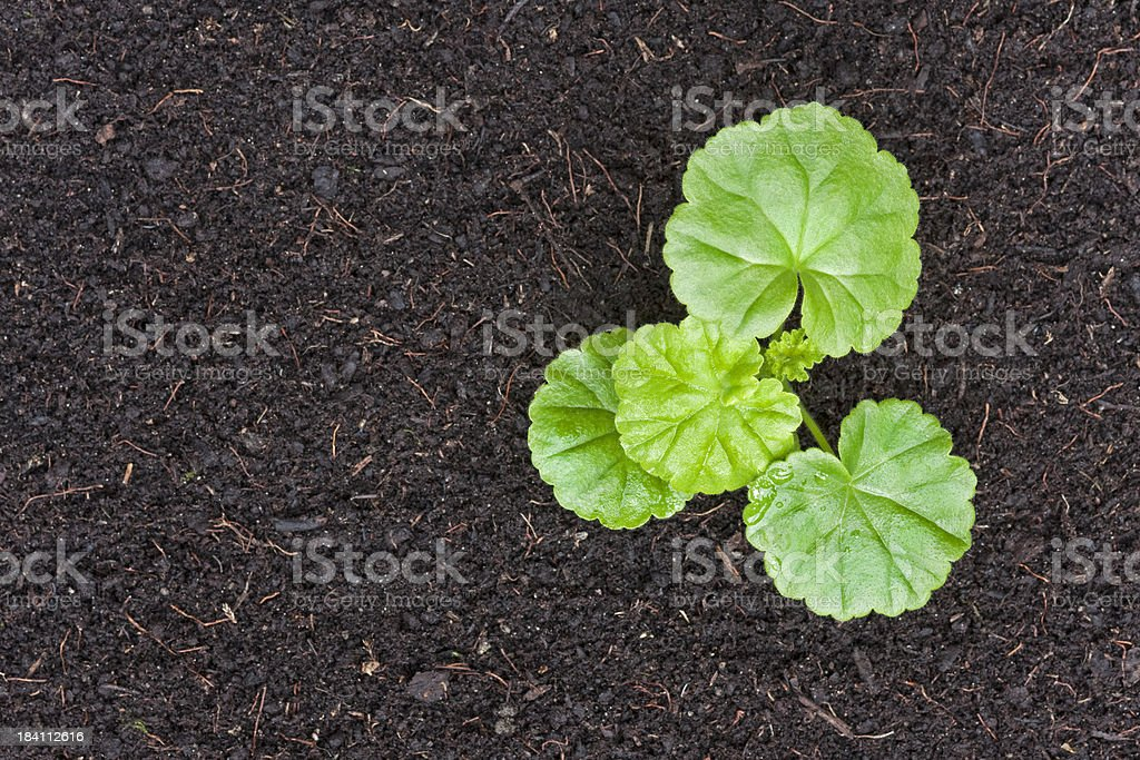 Lonely plant stock photo