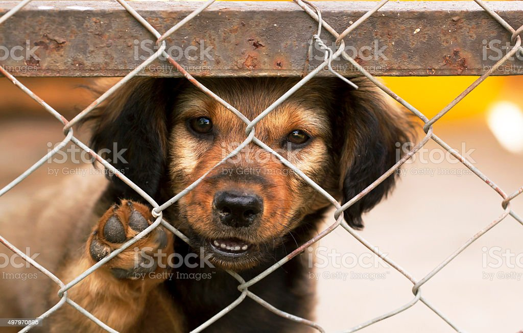 Lonely puppy stock photo