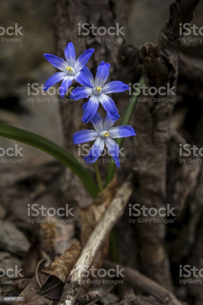 lonely purple flowers living in a dead tree stock photo