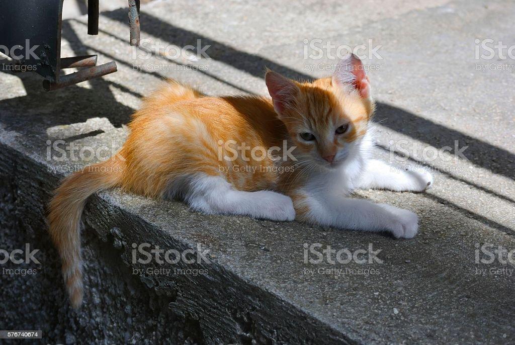 Lonely red kitten. zbiór zdjęć royalty-free