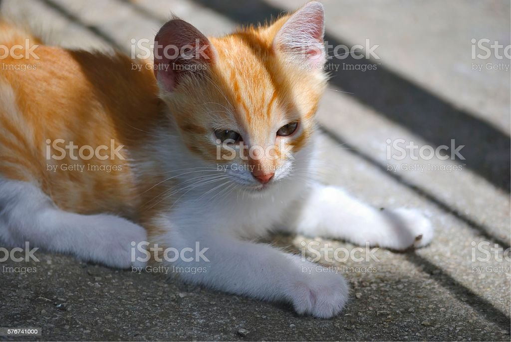Lonely red kitten. stock photo