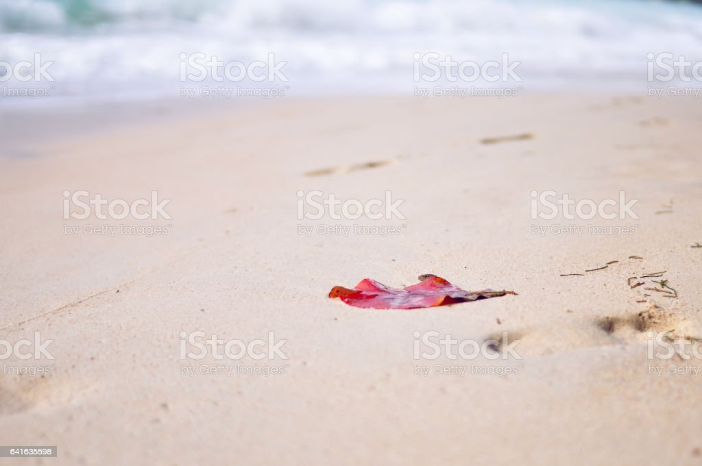 Lonely red leaf  driven a shore as a conceptual background stock photo